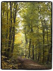 Waldweg (1elf12) Tags: autumn trees germany deutschland herbst partialcolor waldweg mpf omot elmlappwald reitlingstal