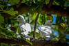 DSC_1919 2 (NICOLAS POUSSIN PHOTOGRAPHIE) Tags: soleil eau sable bleu coco fin vague plage rocher palmier bois seychelle turquoide