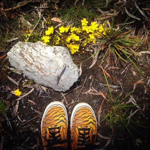 #fromwhereistand #yellow