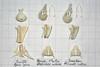 ComparisonSwiftMartinSwallow2 (JRochester) Tags: house skeleton skull martin bones bone swift swallow pelvis apus sternum mandible rustica hirundo delichon urbica