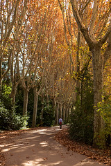 IMG_7636_web (juan.pe (anna_p)) Tags: madrid park autumn trees sky leaves outdoors alley colorful day tranquil healthyliving traveldestinations symethry