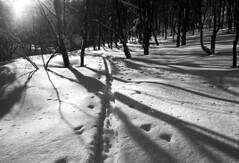 Vanishing route (threepinner) Tags: microfilm hokkaidou hokkaido northernjapan japan winter skiing snow pentax mzm rikenon 28mm f28 kodak imagelink hq mtokuteine mountainsnaps 奥手稲山 札幌 北海道 sapporo 北日本 日本