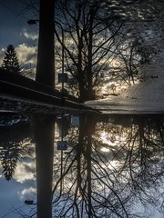 Reflections upside down (benjaminwolf1) Tags: silhouette sign upsidedown flipped clouds outdoors sunset light water tree nature reflection puddle frankfurt