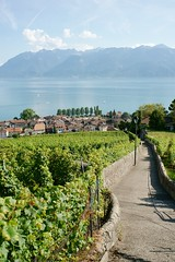 winding through the vines (Riex) Tags: path chemin trail way footpath vineyard vignoble vineyards vignes ete summer cully lavaux village vaud suisse switzerland a900 amount 35mm f2 af minoltaamount minolta