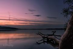 Greifensee (Claudia Bacher Photography) Tags: greifensee sonnenuntergang sunset schweiz suisse switzerland zürich baum tree wasser water see lake langzeitbelichtung longexposure abendstimmung eveningsun dämmerung himmel heaven landschaft landscape outdoor sonya7r