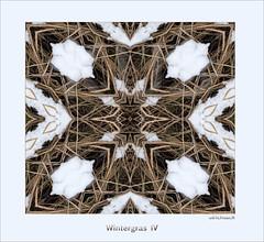 Wintergras 4 (Weinstöckle) Tags: drehspiegelung spiegelung schnee gras winter
