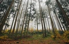 Perfect calm (explore) (desomnis) Tags: woods woodland trees mist misty fog foggy mystic nature austria österreich upperaustria oberösterreich mühlviertel hdr autumn colorful colourful wood canon6d desomnis tamron2470mm multiple exposure