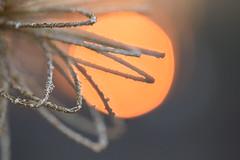 Smile, sparkle, shine ... (Maria Godfrida) Tags: shine sparkle sun evening sunset glitter orange christmas decoration macro closeup glittering sparkling shining