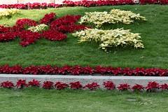 Flores /Flowers  C D M X (davidrove65) Tags: ef28135mmf3556isusm canon eosrebelt4i
