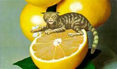 Sour Puss (dadadreams (Michelle Lanter)) Tags: collage collageart postcardart artpostcard vintagepostcard retropostcard alteredpostcard alteredart citrusfruit grapefruit sourpuss catart feline