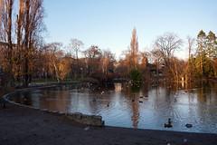 Stadtpark, Vienna (SomePhotosTakenByMe) Tags: stadtpark citypark park baum tree teich pond duck ente animal tier urlaub vacation holiday vienna wien austria österreich stadt city innenstadt downtown outdoor