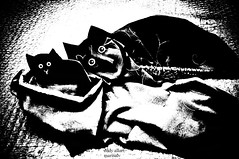 Kitten in a Basket (Eddy Allart) Tags: cats katzen poes kat poezen gatito gata art drawing dibujo tekening rotterdam rotterdamse kunst animal