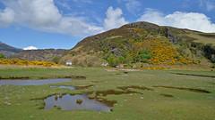 Galltair.. (Harleynik Rides Again.) Tags: glenelg galltair glenmore mountain heather spring highlands scotland nikondf harleynikridesagain explore inexplore