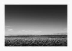 Desolation (bnishimoto) Tags: fuji fujifilm myfujifilm xpro2 18135mm photoessay shorelinebaytrail charlestonslough mountainview bayarea landscape blackandwhite bw