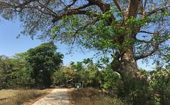 Myanmar, Yangon Region, Southern District, Kungyangon Township, Ka Nyin Kone Village Tract (Die Welt, wie ich sie vorfand) Tags: myanmar burma bicycle cycling bike yangonregion yangon rangoon southerndistrict kungyangontownship kungyangon kanyinkone