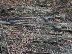 Manual Photos - Batch3-Jan1713 (greenby.nature) Tags: frozen frozenleaf rust rustedcars rustedengine moss frozenpuddles frostywalk sunthroughthetrees grass decayedsleepers