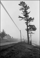 1991_0496-24_spot_20160829 (Réal Filion) Tags: beauce québec canada arbre route chemin maison brouillard fil électrique poteau pin campagne tree road house fog wire electric pole pine country noiretblanc blackandwhite