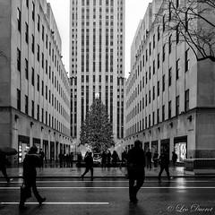 _DSC1775_Flickr.jpg (l.ducrot) Tags: newyork boston nouvelan usa20162017 christmas christmastree sapindenoel noel sapin rockfeller topoftherock streetphotography photoderue noiretblanc blackandwhite bw
