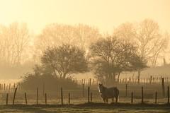 Misty Camargue Sunrise (NathalieSt) Tags: camargue europe fz1000 france gard languedocroussillon lumix lumixfz1000 panasonic paysage brume campagne countryside landscape leverdesoleil mist sunrise