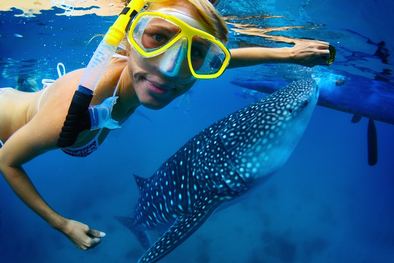 whale-shark-encounter