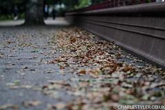 Flickr-9107.JPG