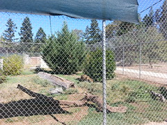 20150919_122243 (mjfmjfmjf) Tags: oregon zoo 2015 greatcatsworldpark
