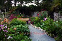 Rose's Cottage (Ken Meegan) Tags: flowers ireland flower garden tinternabbey cowexford saltmills rosescottage colcloughwalledgarden 3102015 tinterntrails