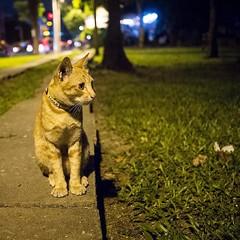 ส่งเสียงเรียกทางนี้ๆๆๆๆๆ ไปมองหาอะไรทางนั้น?!? #แมวงง #cat #catsofinstagram