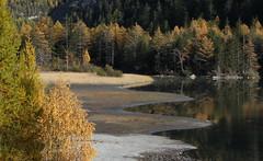 Derborence (bulbocode909) Tags: nature jaune automne eau suisse vert arbres lacs valais montagnes derborence forêts