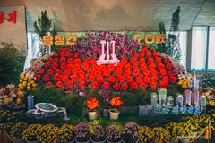 Flower Exhibition for the 70th Anniversary of Workers' Party (reubenteo) Tags: city red tourism war asia fireworks military korea parade communism celebration kimjongil vip metropolis comrade socialism tanks workersparty northkorea pyongyang 70thanniversary dprk kimilsung kimjongun
