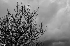 ((mig)) Tags: sky bw tree blancoynegro naked arbol gijn bn cielo desnudo ramas xixn pericones