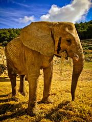 Un animal tranquilo (LL Poems) Tags: sky elephant nature beautiful animals clouds scenery wildlife safari excellent elefante excelente excapture llpoems