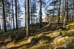 Korpisaari (Juho Holmi) Tags: autumn lake macro fall beautiful weather k forest suomi finland dc scenery finnland pentax 5 sigma 45 17 28 af 70 tampere loma mets k5 syksy jrvi nsijrvi soumi yljrvi 1770mm f2845 pirkanmaa ylinen birkaland mutala korpisaari