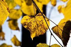 L'art feuille (Gerard Hermand) Tags: 1512040244 automne autumn fall gerardhermand france paris eos5dmarkii arbre ciel feuille jaune leaf sky tree yellow canon