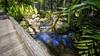 Mt Cootha Botanical Gardens (goodgirlbetty) Tags: longexposure gardens creek botanical waterfall mt small indoor filter nd inside riparian cootha ndx400