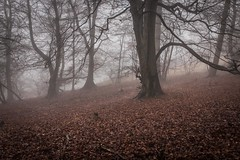 ltr-4292 (KazzT2012) Tags: fog woods trees chilterns mist canoneos70d landscape thechilterns