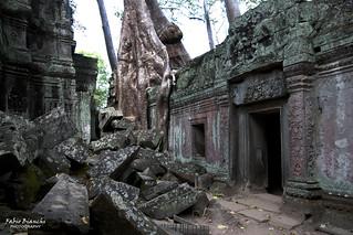 Tempio di Ta Phrom - Cambogia