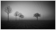 eifel autumn (Andibart) Tags: eifel autumn herbst nebel fog trees bonjourtristesse nothingness