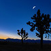 Moon+Over+Joshua+Trees
