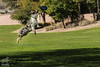 Dang, that boy he can fly (Jasper's Human) Tags: australianshepherd aussie fly run jump frisbee