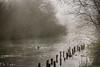 River Test (ellie.taylor30) Tags: mist hampshire whitchurch nikon landscape winter flickrnature