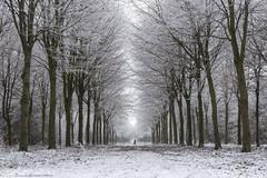 (CarolienCadoni..) Tags: sonyslta99 sal2470z snow cold trees white groningen fledderbos winter