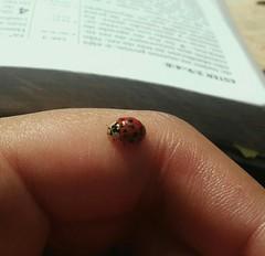 Dona Jô (dearspringtime) Tags: joaninha inseto naturelover naturelife natura natural natureza nature jw bible ladybird ladybirdy insect spring springtime primavera summer summervibes springvibes