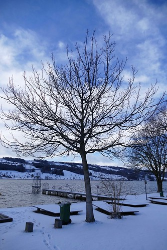 Winter Landscape in Switzerland Baldeggersee