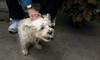 happy Ruffy (Dotsy McCurly) Tags: ruffy happy smiling cute dog back scratched heaven bliss yard nj canonpowershotg1xmarkii smileonsunday cairnterrier