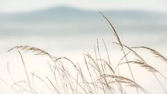 Dry Grass in Winter Landscape