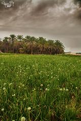 (A.Alwosaibie) Tags: nikon d90 18105mm photo shot aalwosaibie 2017 spot light palm green ahsa alhasa saudi ski sky