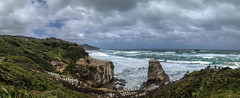 Muriwai (John Willoughby) Tags: newzealand cliff storm west weather birds coast rocks native windy stormy auckland muriwai