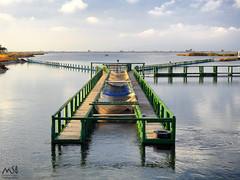 Delta del Ebro.Octubre 2015_4 (MSB.Photography) Tags: park españa nature rio river canal spain nikon natural delta lagoon catalonia p900 catalunya laguna ebro cataluña tarragona santpere deltadelebre deltadelebro encanyissada pantena nikonp900