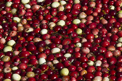 This is Your Juice! (brucetopher) Tags: autumn red fall colors berry berries redsea farming harvest floating fresh cranberry cranberries bogs float bog cranberryjuice freshfruit redberries seaofred wetharvest